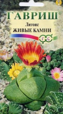 Литопс Джезин Живые Камни 5шт (Гавриш)